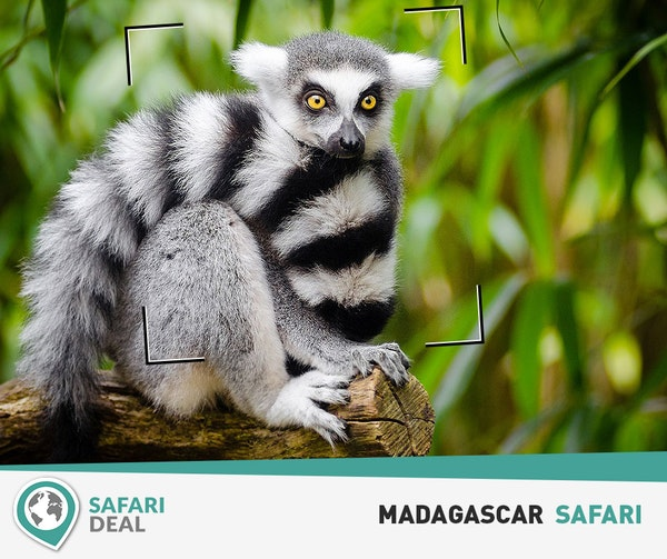 Safari deal fb madagascar 01