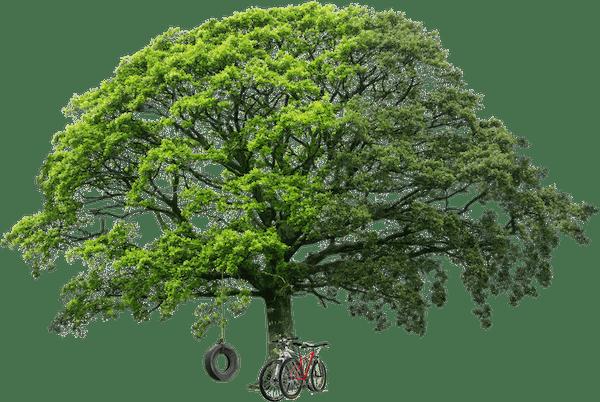 Tree and bikes  1