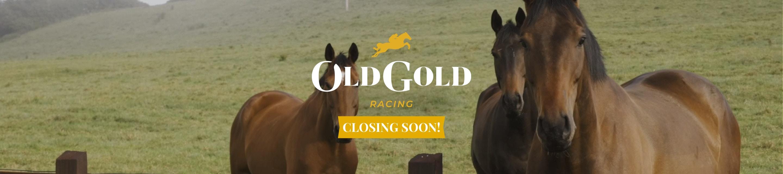 Old Gold Racing hero image